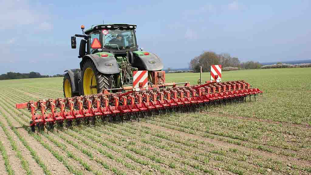 Valuable lessons from organic OSR