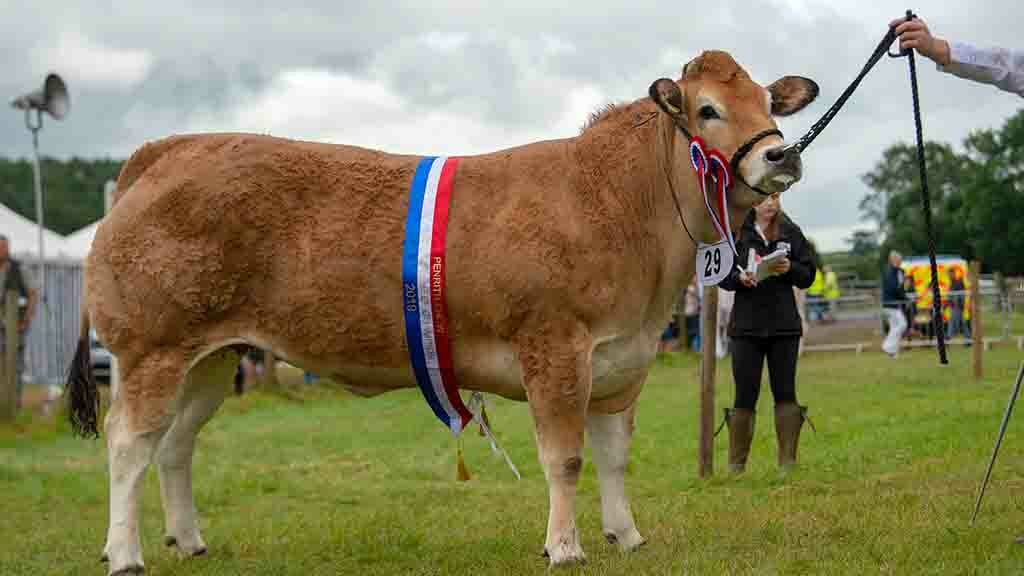 Parthenais debut in Penrith inter-breed