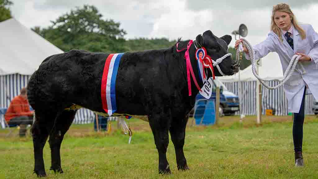 Inter-breed beef reserve and British Blue champion, Brennand Not On My Nelly.
