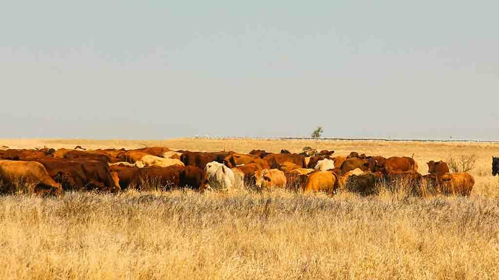 Global Ag View: Australia beefs up farm trespass laws for animal rights activists