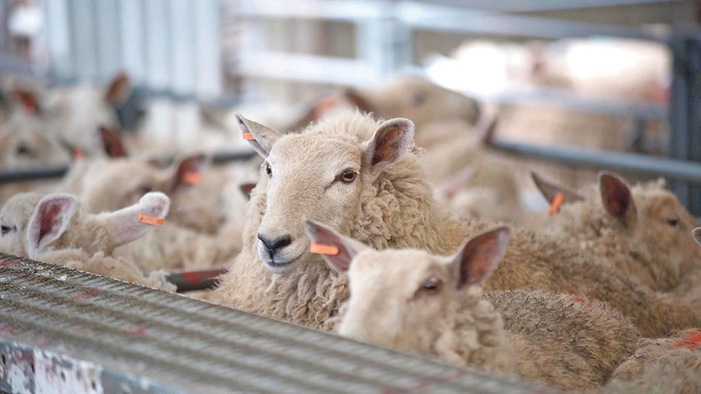 'Government support should focus on stopping the lamb market from crashing'