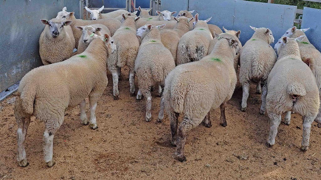 Vet's View: Fatal problems caused in ruminants by copper toxicity
