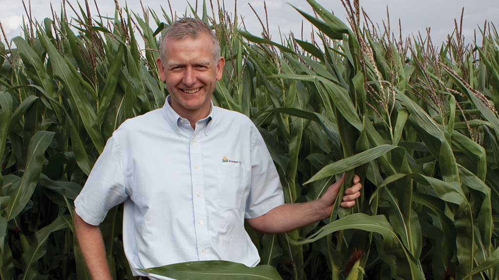 Dairy Show 2019 preview: Sowing maize deeper may be solution to bird problem