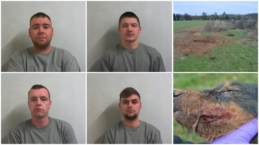 Four men sentenced for interfering with badger sett and causing unnecessary suffering