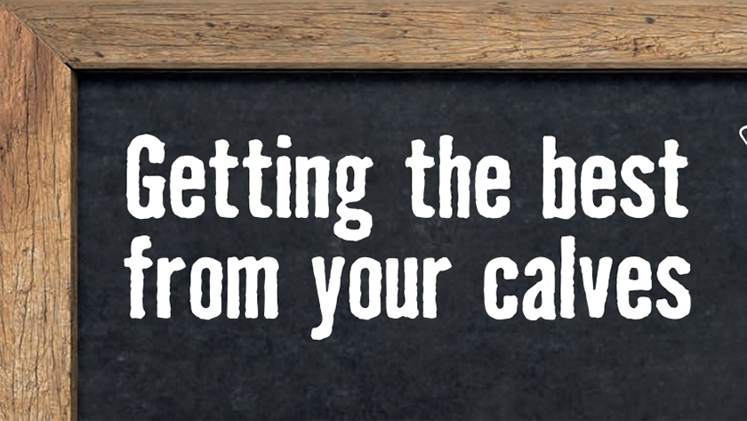 Getting the best from your calves