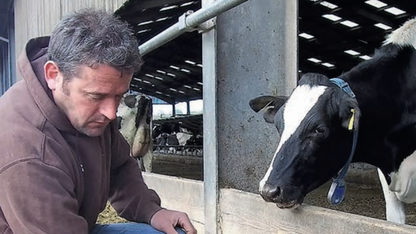 Testing calves as part of BVD monitoring and control plan will pay dividends