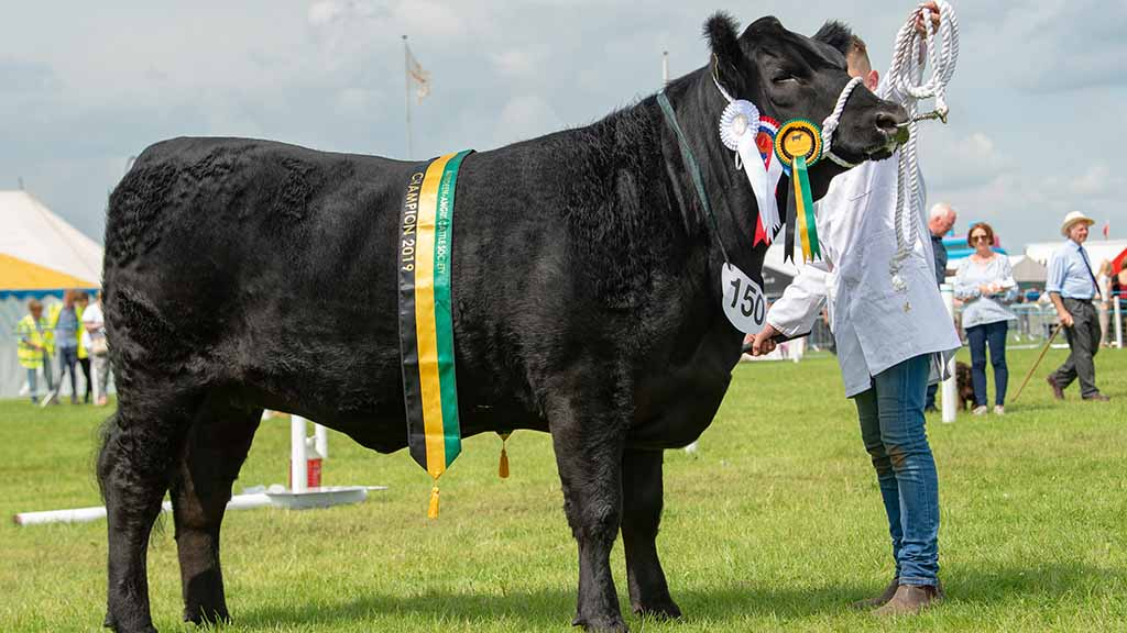 Reserve inter-breed beef and Aberdeen-Angus champion, Carruthers Elspeth, from D. and K. Graham.