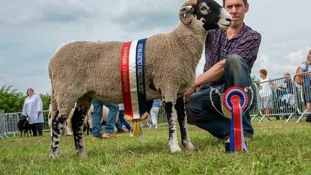 Swaledale tops record sheep entry at Garstang