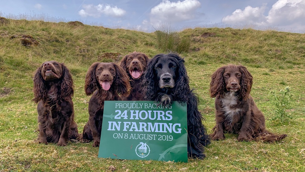 #Farm24 2019: Celebrating British food and farming - how to get involved
