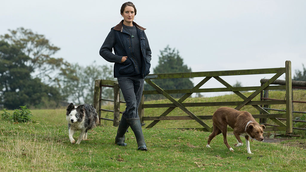 In Your Field: Marie Prebble - 'I'm visiting beautiful landscapes in search of sheep'