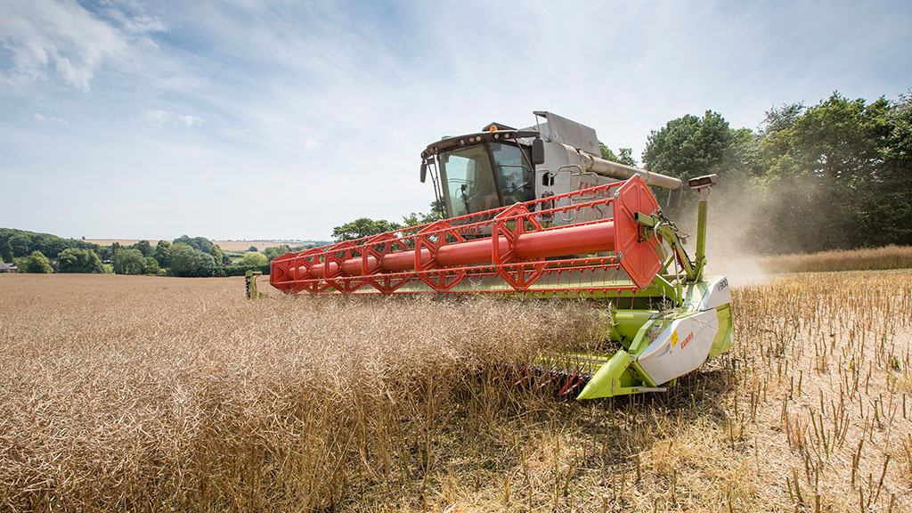 Weaker sterling boosts rapeseed as dry weather hits yields across Europe