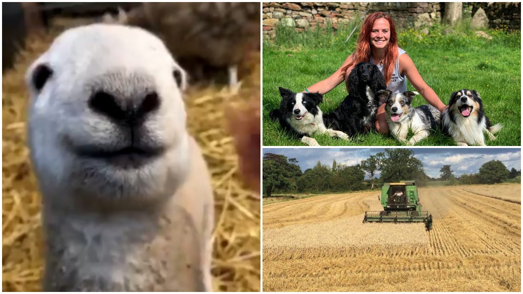 Our favourite #Farm24 tweets so far as adorable lamb steals the show