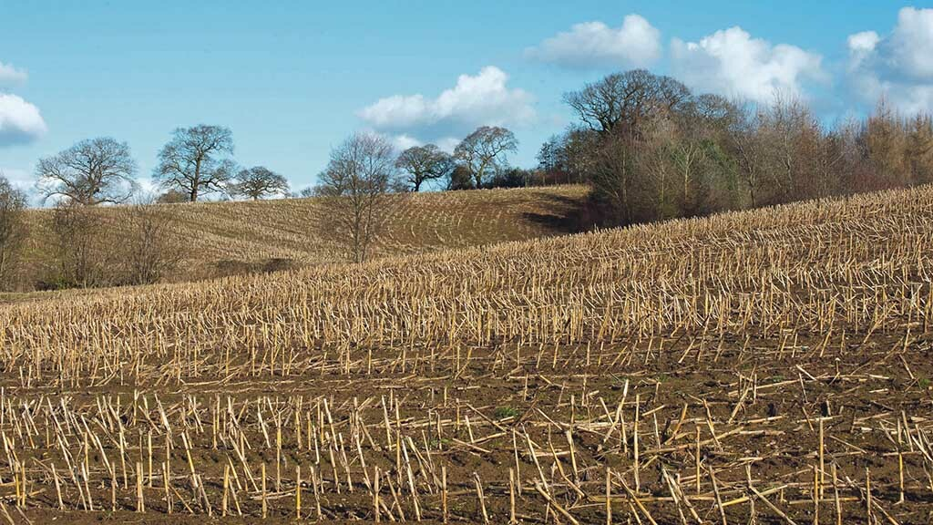 Improving returns: Grass after maize could help to bridge forage gap