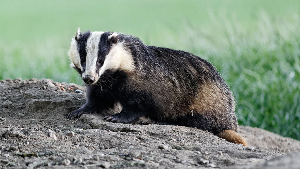 Welsh bovine TB policy 'not fit for purpose' as cattle slaughterings spike