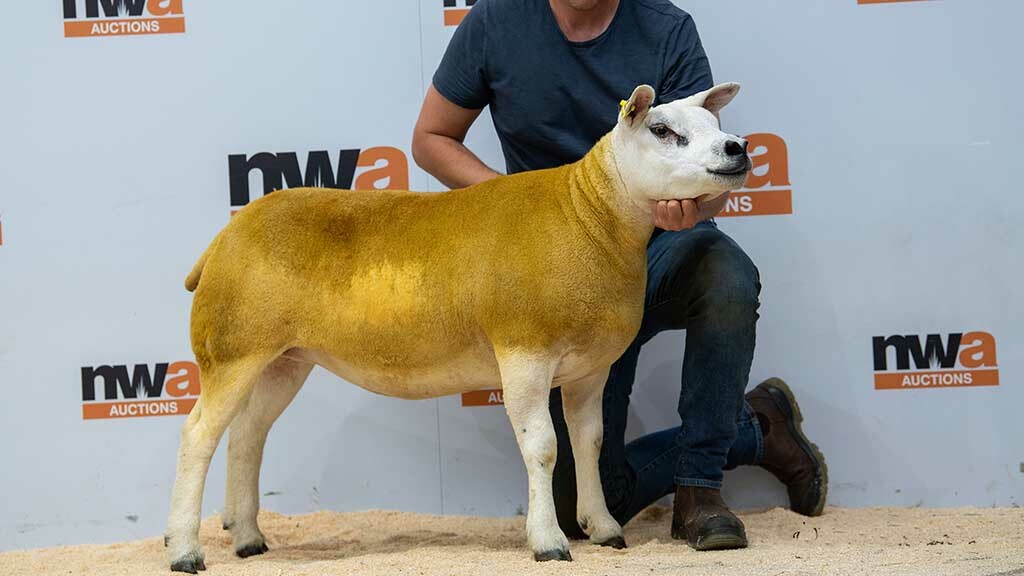 New centre record set at 5,500gns by Messrs Bradley, Barnoldswick.