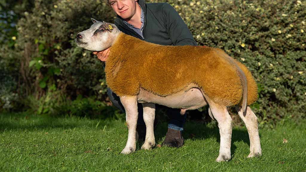 12,000gns, Buckles Einstein from the Buckles family, Kirkby Stephen.