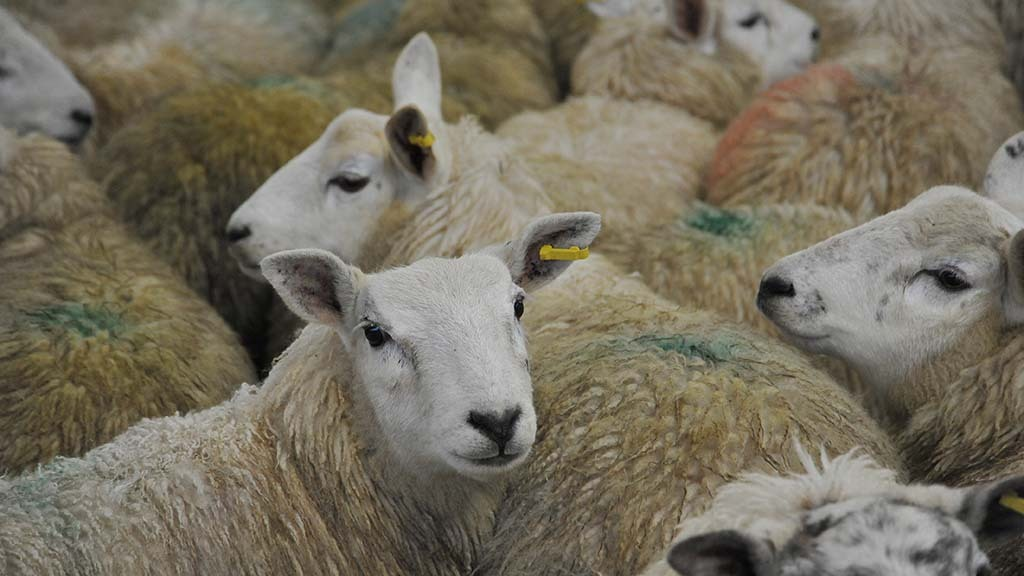 'Another blow' for Welsh farmers as Cardigan auction mart set to close
