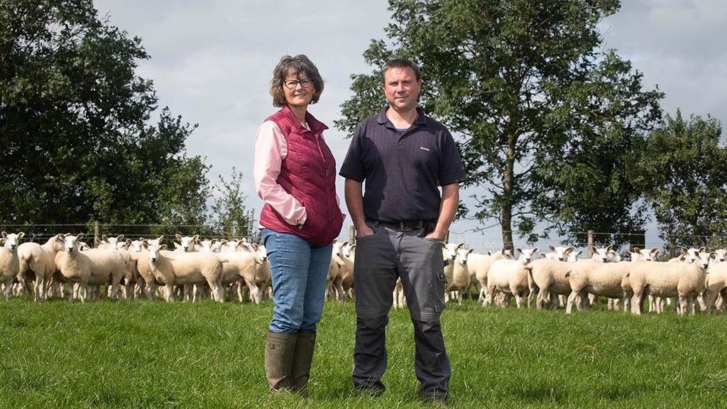 Sheep special: Experimenting first-time farmer focuses on ewe performance