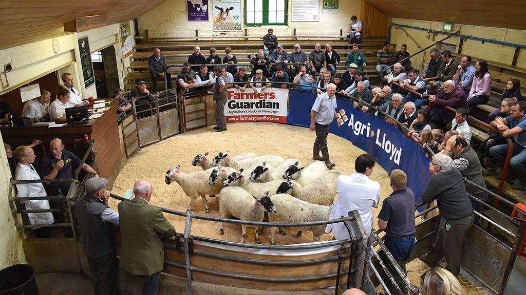 Sheep special: Tighter UK lamb numbers may help Brexit uncertainty