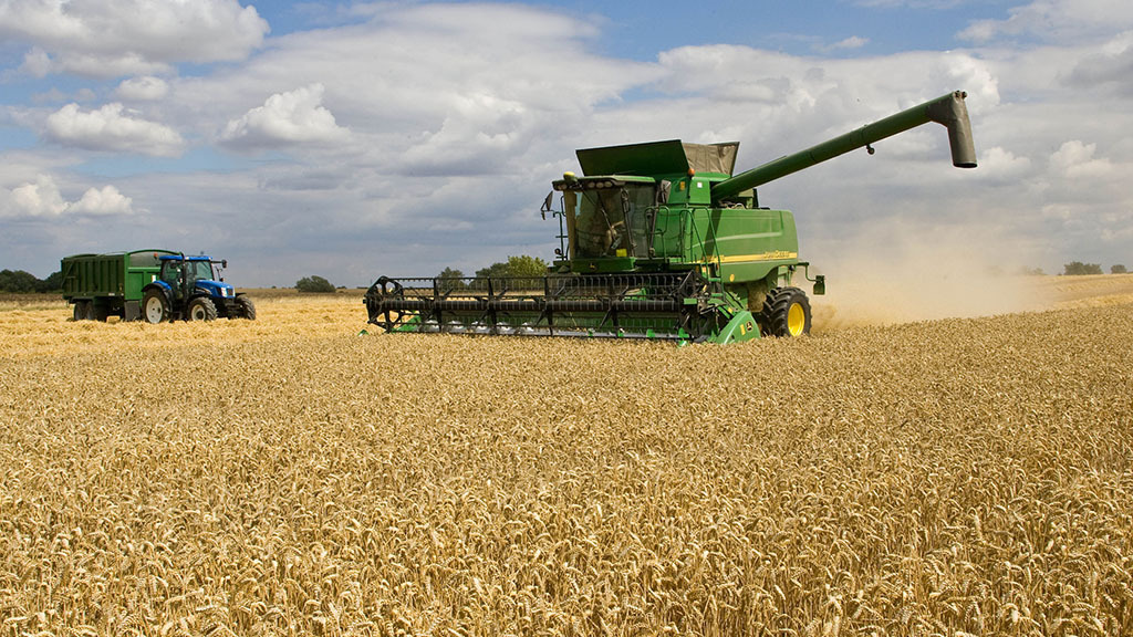 Survey shows wheat yields 7 per cent up on five-year average