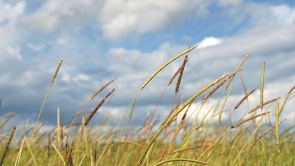 Hot weather brings forward black-grass seed maturity