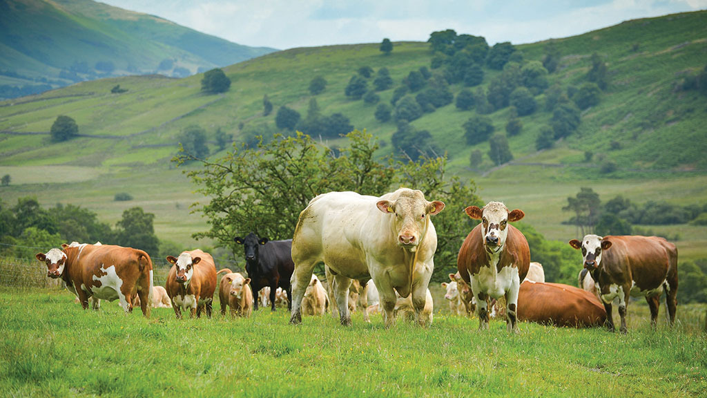 Preventing blackleg deaths in cattle: What farmers need to know