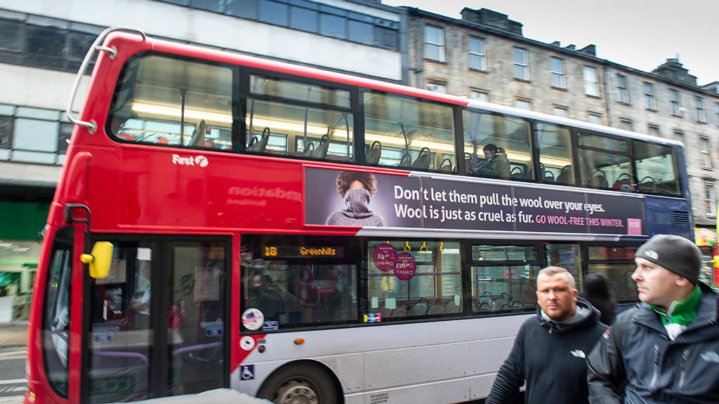 'The properties of wool should be celebrated' - FG victory as PETA wool advert banned
