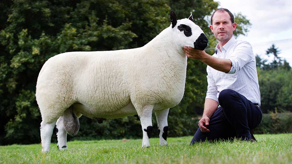 A.T. Probert, Ludlow set a new record of 4,200gns for an aged ram from Jim Rowe, Ludlow