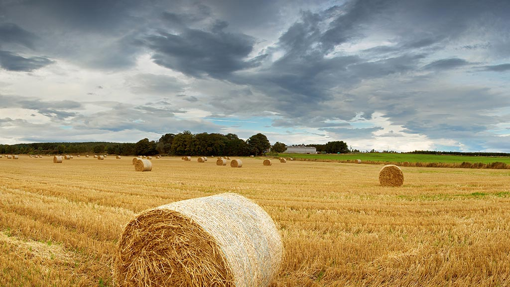 Scottish harvest stalls as haulage firms struggle to keep up