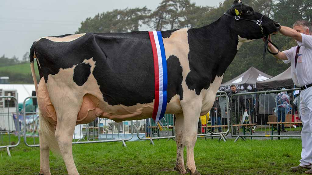 Inter-breed dairy and Holstein champion, Crossrigg Fremont Roxy, from F. Harrison and Sons, Cliburn.