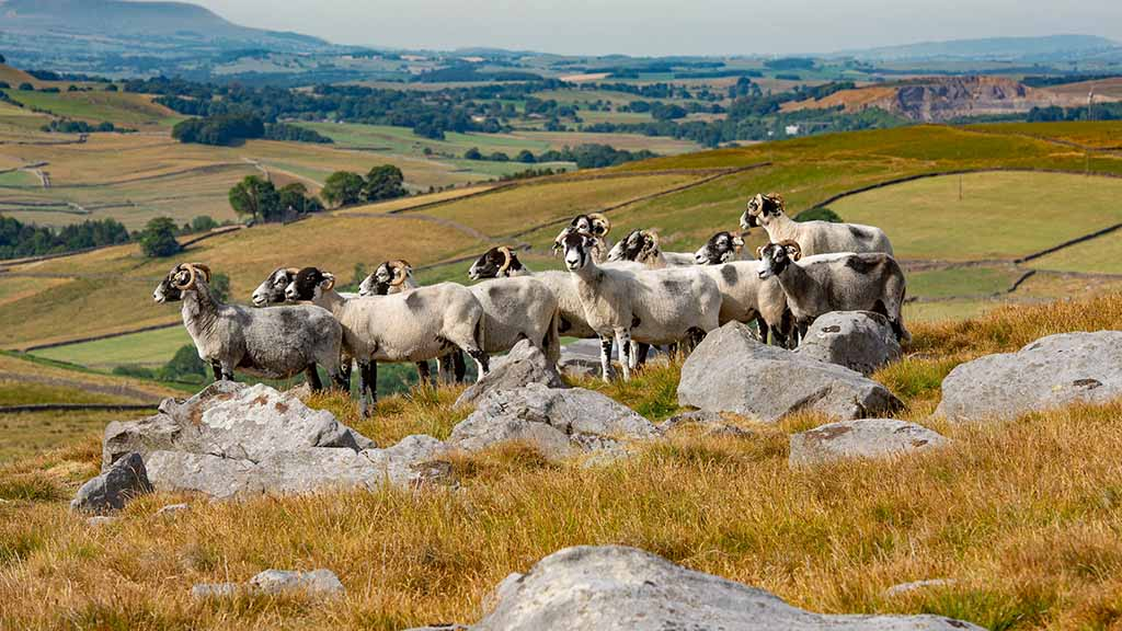 New survey shows overwhelming public support for British farmers
