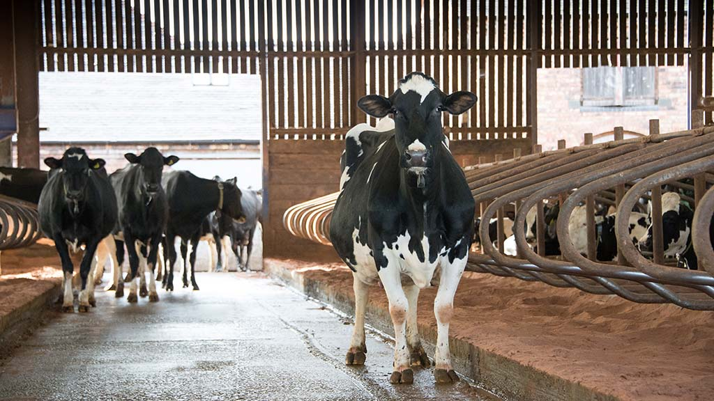 UK Dairy Day 2019: New 'clean air strategy' impacts dairy farmers