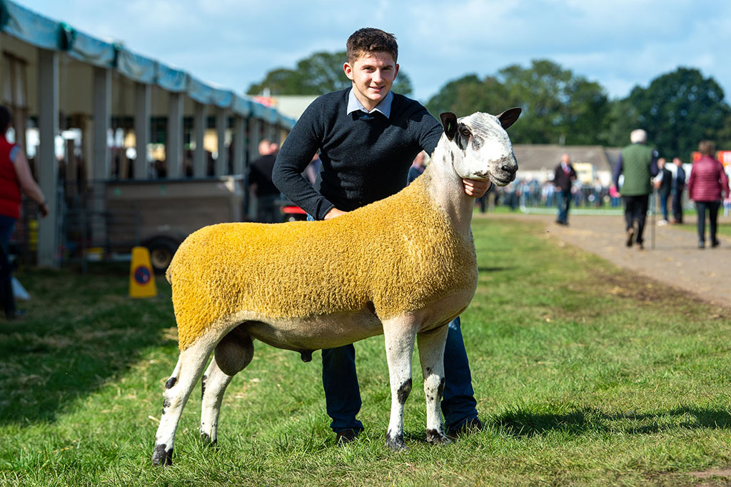 A Bluefaced Leicester shearling from J. Wight and Sons, Biggar, which sold for 12,000gns.