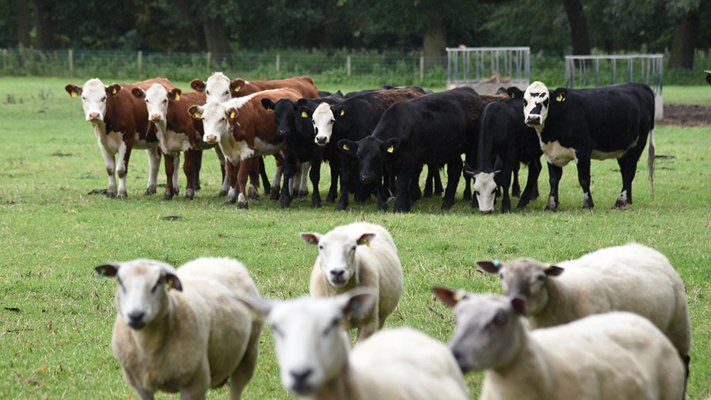 Beef benefits from strong retail sales
