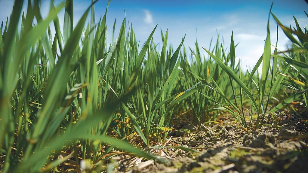 Suppliers and agronomists plan ahead to meet grower needs during coronavirus pandemic