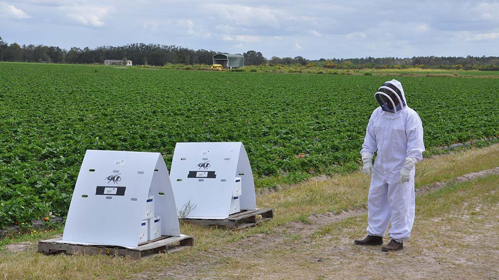 First fungicide to be applied to crops using bees