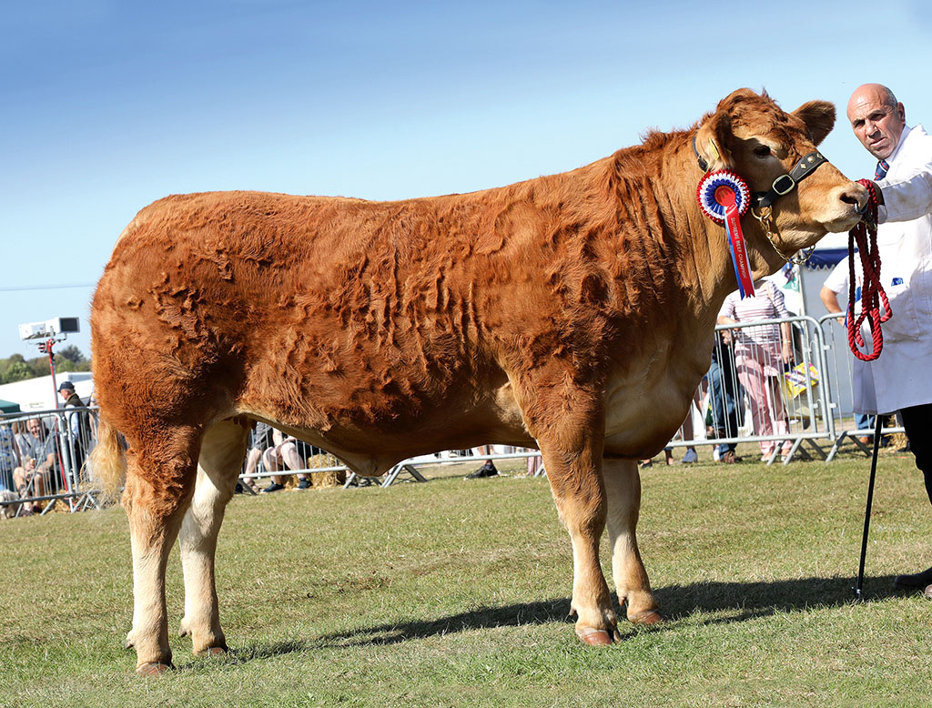 Inter-breed beef and Limousin champion, Dinmore Noueuse, from P. Dawes, Herefordshire.