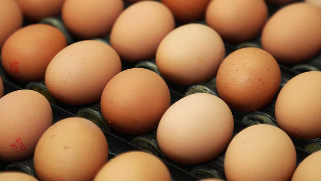 Covid-19 sees egg sector turbulence as retailers struggle to meet soaring demand