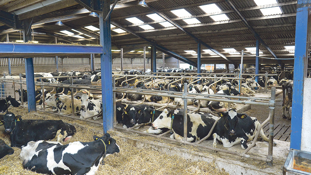 'The top 25% of dairy farmers saw combined savings of £13,836 per 100 cows from improved health'