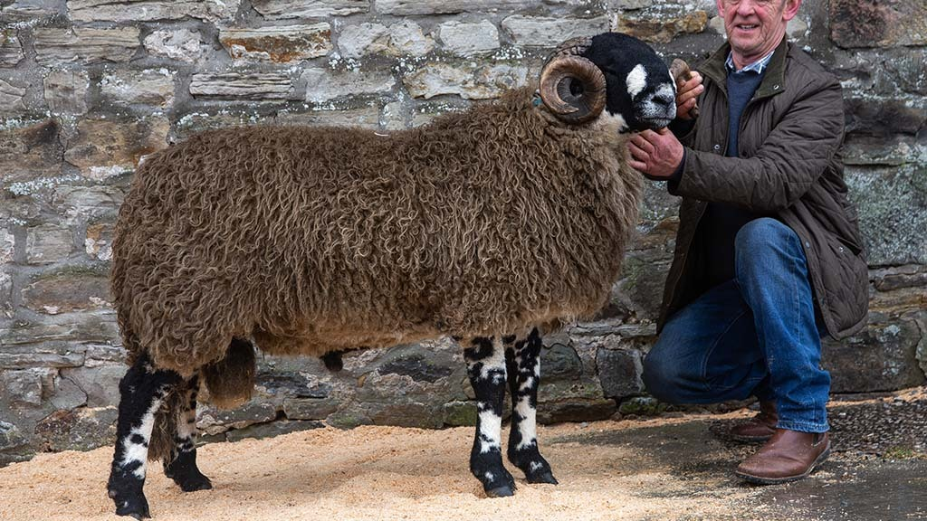 New Dalesbred breed record of £12,000 set at Bentham