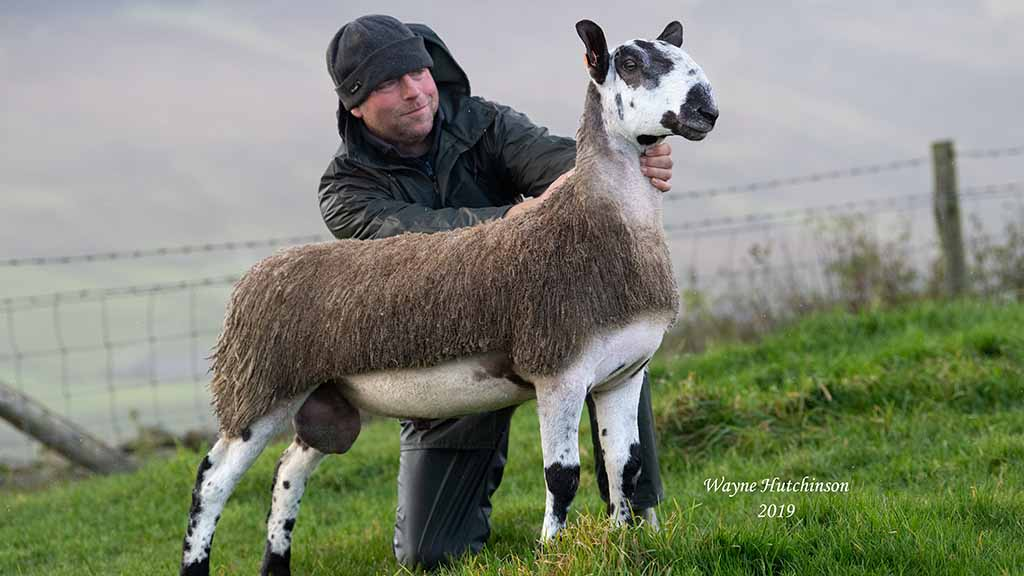 Bluefaced Leicesters sell to £30,000 high at Hawes
