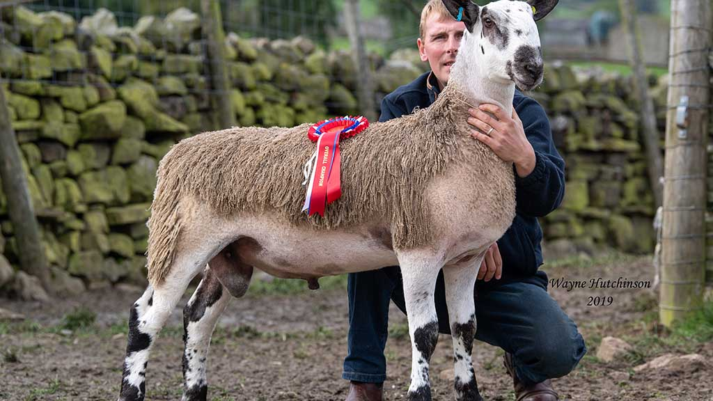 Overall champion, Yore House M1, from John, Martin and Stephen Pedley, which sold for £20,000.