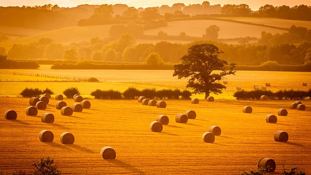 What British farming businesses are doing to prepare for Brexit