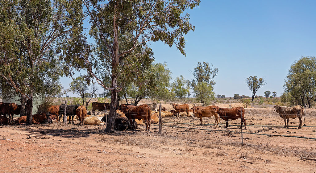 Australian drought brings 'perfect storm' with Gov policy in firing line