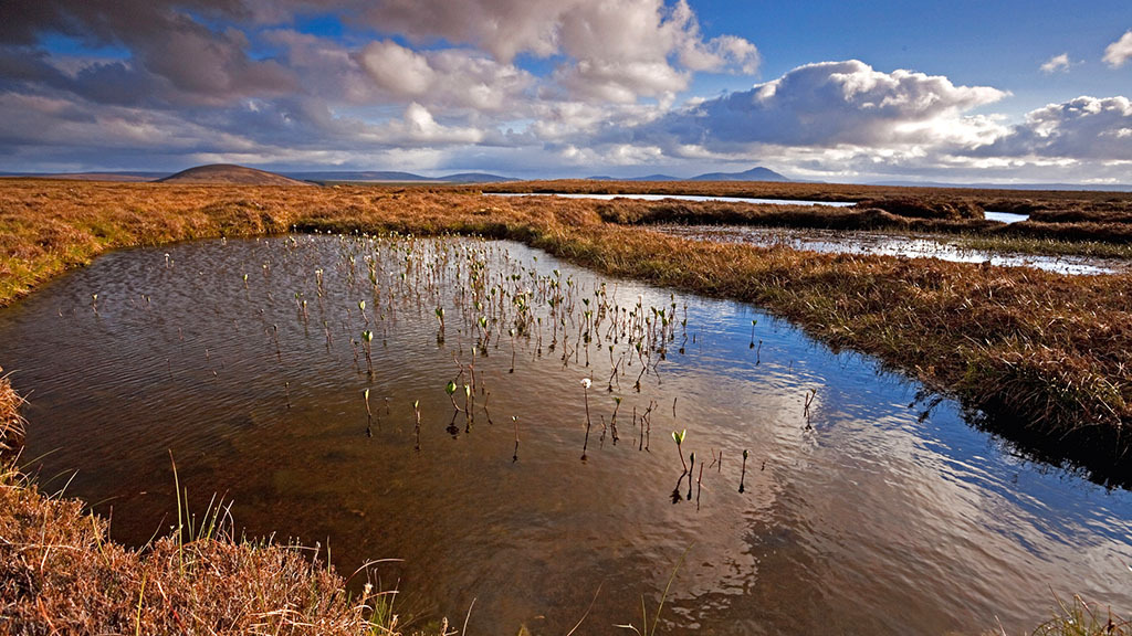 Tree planting will not mitigate climate change without action on peatlands, says CPRE