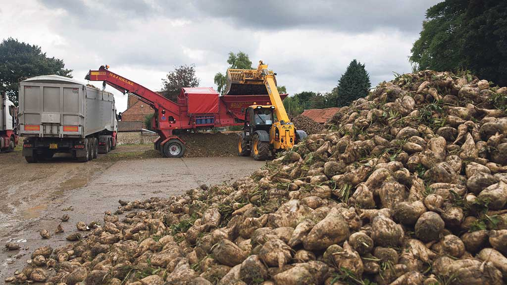 Can the sugar beet playing field ever be level for UK farmers after Brexit?