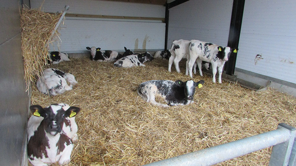 Animal health: Calf sheds play key role in producing healthy calves