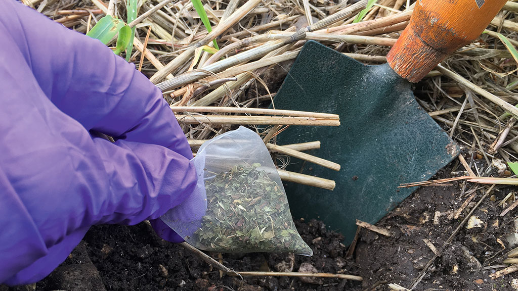 Microbial activity is a key indicator of soil health