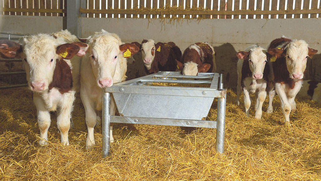 Beef special: Get on top of diseases with treatments at housing