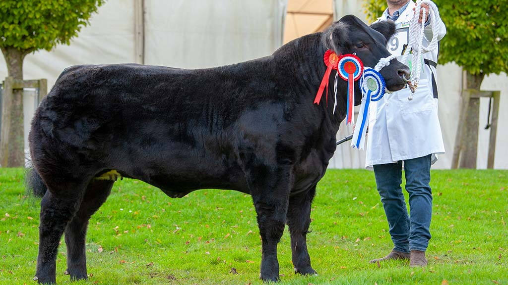 Heifer and reserve champion Tui 2